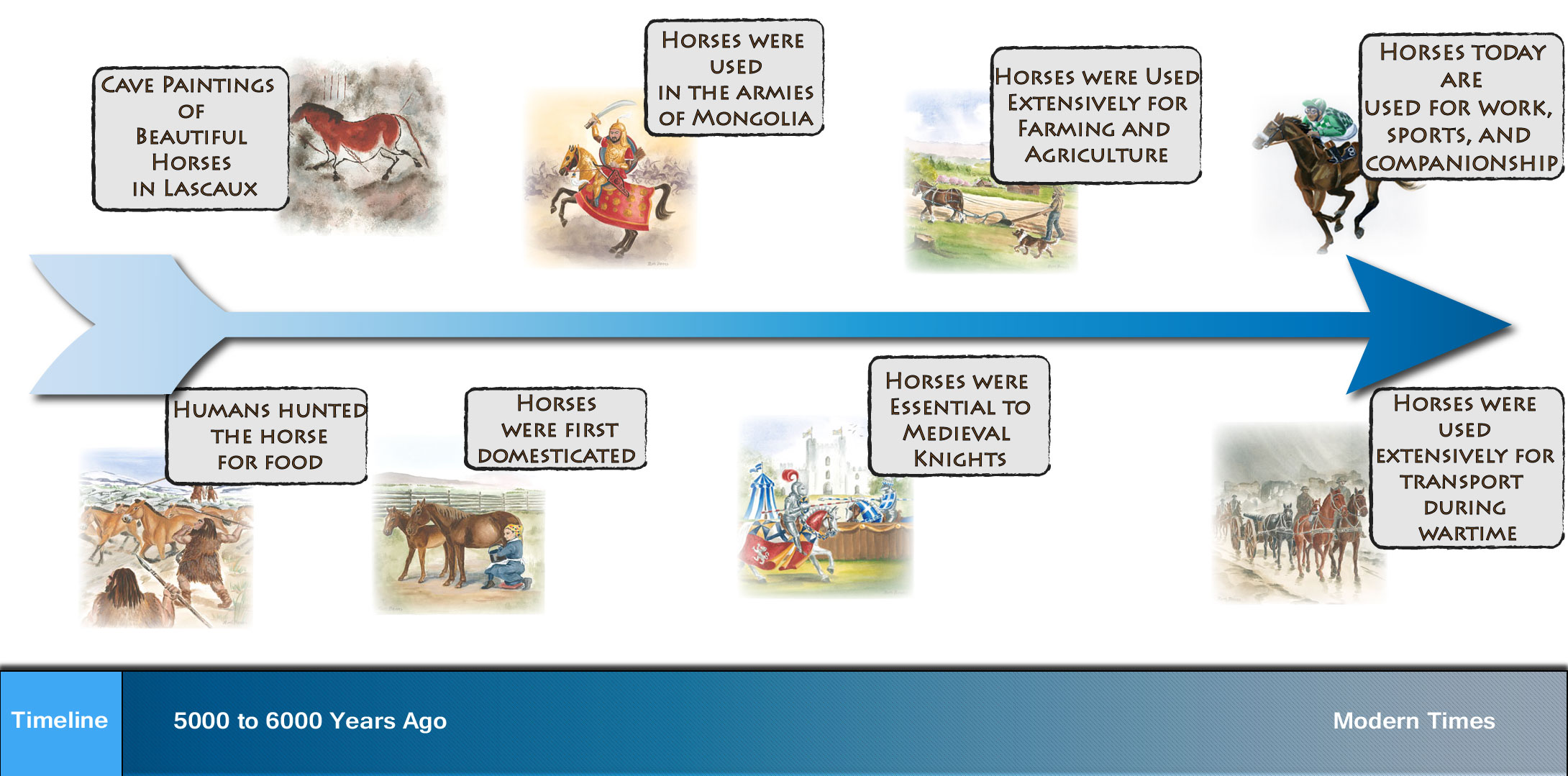 Journey of the modern horse and humans together!