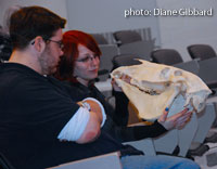 participants examine horse skull close-up