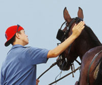 Sign Up for Equine Guelph's Groom One Course