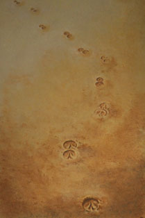 hoofprints in the sand image