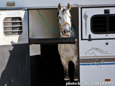 One cause of BioSecueity risk is travelling horses