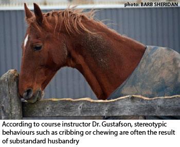 cribbing horse
