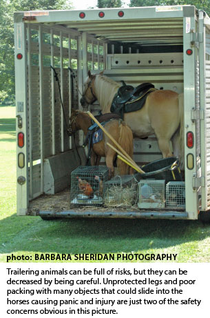 mare and foal in trailer