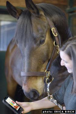 Horse Health Tracker App Tool