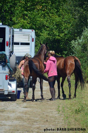 loading two horses on trailers
