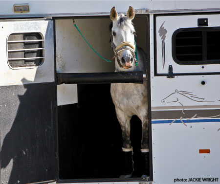 Horse in trailer image