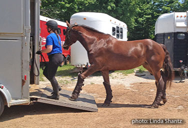 loading horse into trailer