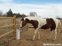 horse with frost-free waterer