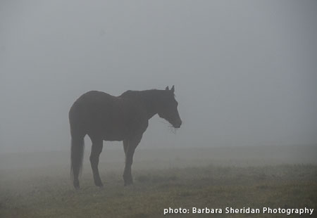 horse in morning mist