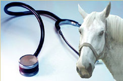 horse and stethoscope image
