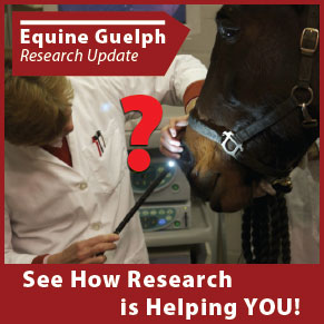 See how Research is Helping YOU! - Equine Guelph Research Update