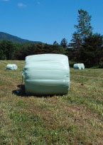 wrapped bale