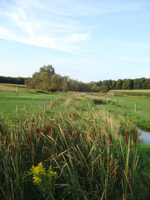 vegetation buffer beside  a stream