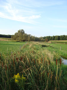 Livestock Fencing and Vegetation Buffer
