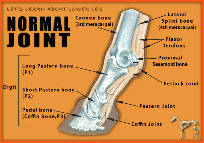 Normal Joint image