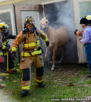 Horse rescue by Firefighter