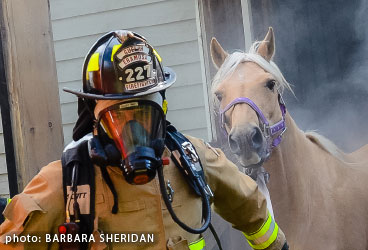 Firefighter rescues a horse from a burning barn