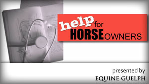 (button) HELP FOR HORSE OWNERS