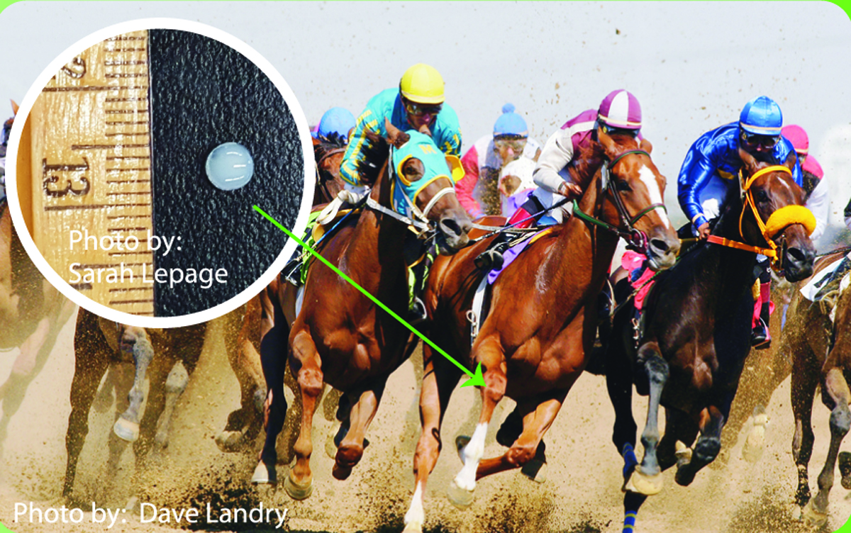 Equine Guelph - News