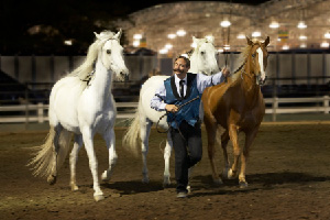 Image of Master Horse Trainer David Lichman with Julio, Thirteen and Scotty