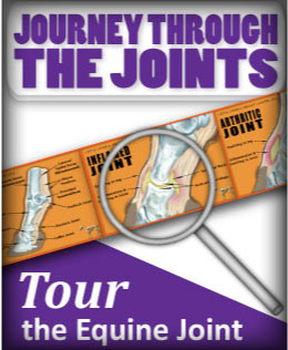 (button) Journey Through the Joints