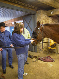 New - Horse Groom Apprenticeship Program - Fall 2012