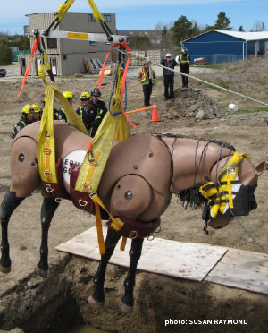Technical Large Animal Emergency Rescue training